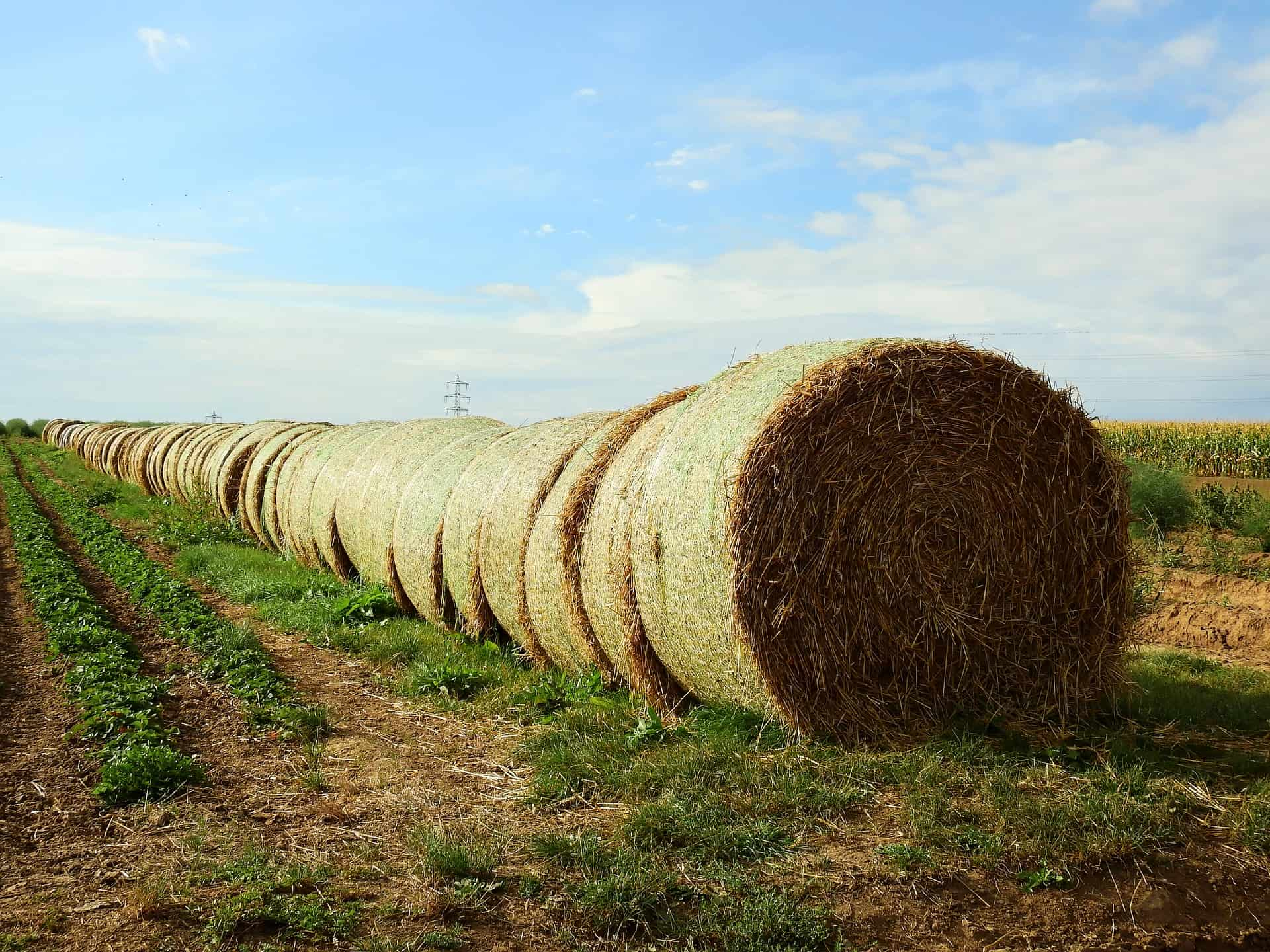 may sure all your hay bales are lined up